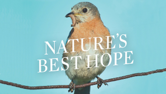 Close up of book cover Nature's Best Hope
